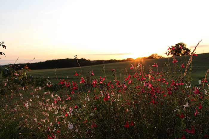 Fleurs au coucher du soleil devant le gite nature